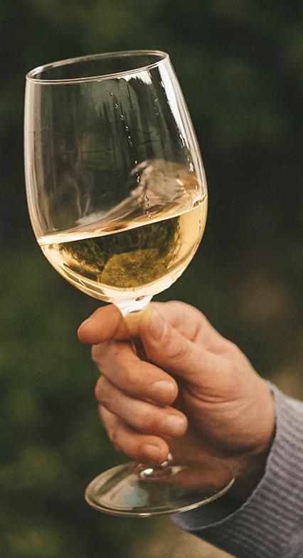 calorias vinho branco e tinto